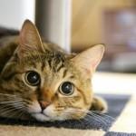 経営者に猫好きが多い理由(猫の日に因んで)。